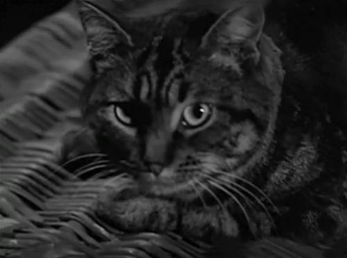 shadowcat2